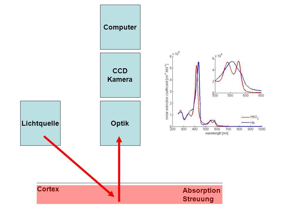 Cortex Optik CCD Kamera Computer Lichtquelle Absorption Streuung