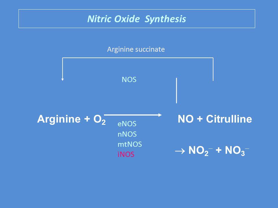 Nitric Oxide Synthesis Arginine + O 2 NO + Citrulline  NO 2  + NO 3  NOS eNOS nNOS mtNOS iNOS Arginine succinate