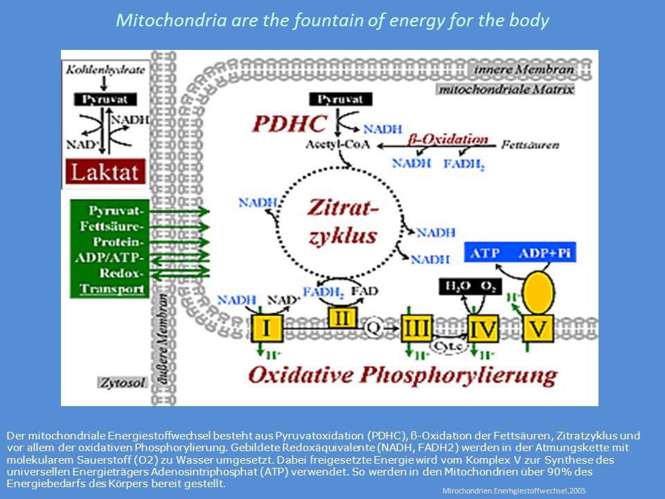 Der mitochondriale Energiestoffwechsel besteht aus Pyruvatoxidation (PDHC), ß-Oxidation der Fettsäuren, Zitratzyklus und vor allem der oxidativen Phosphorylierung.