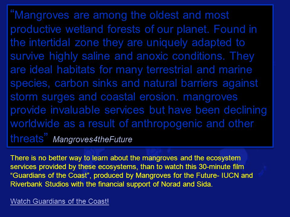 """ Mangroves are among the oldest and most productive wetland forests of our planet. Found in the intertidal zone they are uniquely adapted to survive"