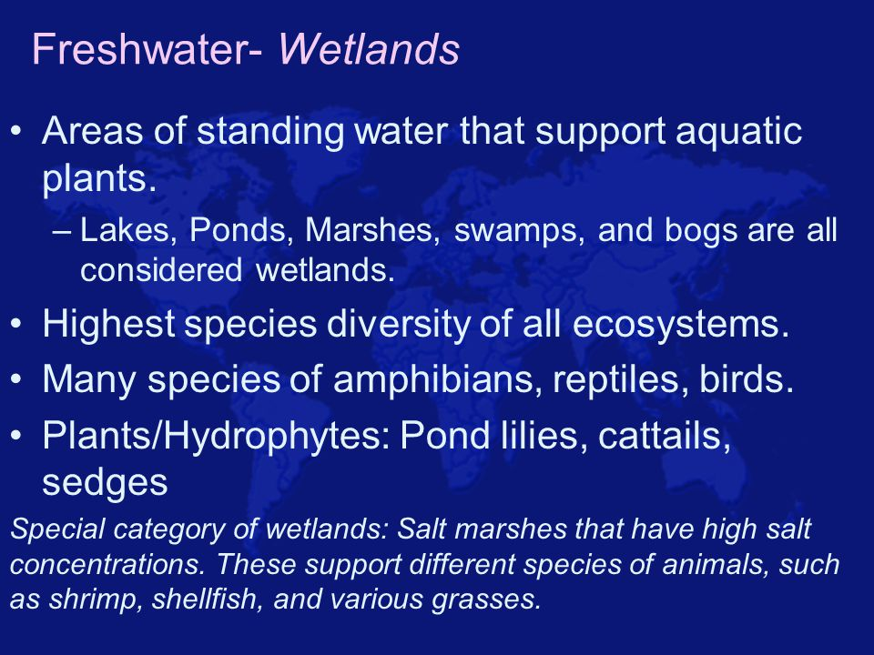 Freshwater- Wetlands Areas of standing water that support aquatic plants. –Lakes, Ponds, Marshes, swamps, and bogs are all considered wetlands. Highes