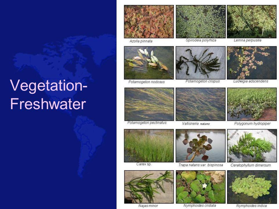 Biodiversity use of freshwater system