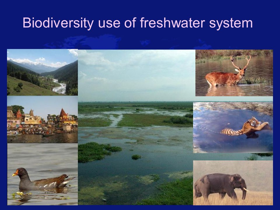 Estuaries Areas where freshwater streams or rivers merge with the ocean.