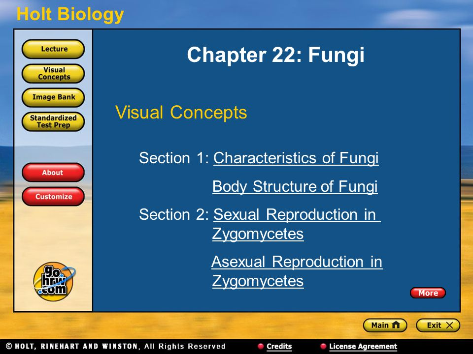 Holt Biology Chapter 22: Fungi Visual Concepts Section 1: Characteristics of FungiCharacteristics of Fungi Body Structure of Fungi Section 2: Sexual Reproduction in ZygomycetesSexual Reproduction inZygomycetes Asexual Reproduction in ZygomycetesAsexual Reproduction inZygomycetes