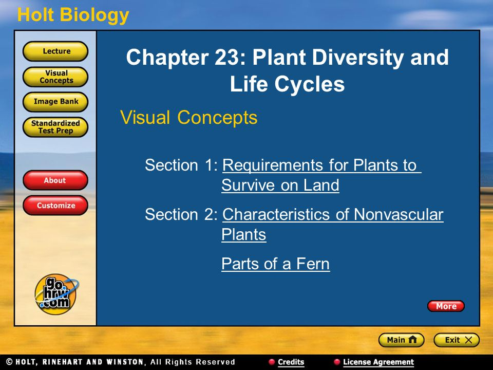 Holt Biology Chapter 23: Plant Diversity and Life Cycles Visual Concepts Section 1: Requirements for Plants to Survive on LandRequirements for Plants toSurvive on Land Section 2: Characteristics of Nonvascular PlantsCharacteristics of NonvascularPlants Parts of a Fern