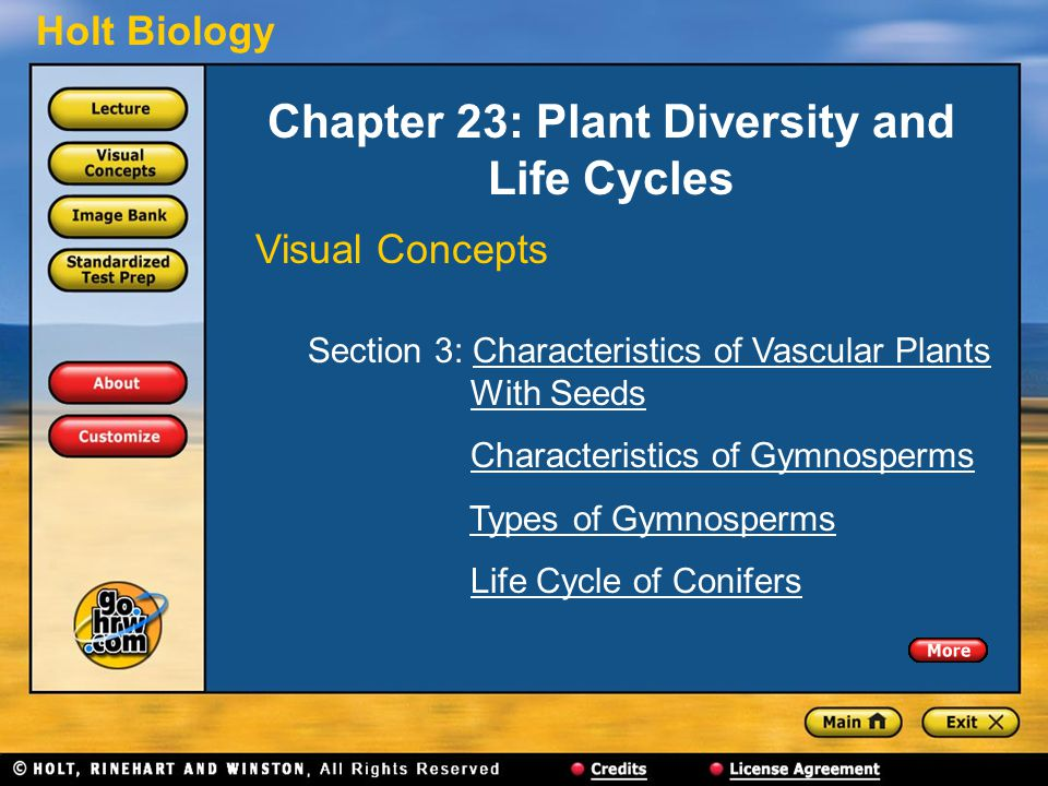 Holt Biology Chapter 23: Plant Diversity and Life Cycles Visual Concepts Section 3: Characteristics of Vascular Plants With SeedsCharacteristics of Vascular PlantsWith Seeds Characteristics of Gymnosperms Types of Gymnosperms Life Cycle of Conifers