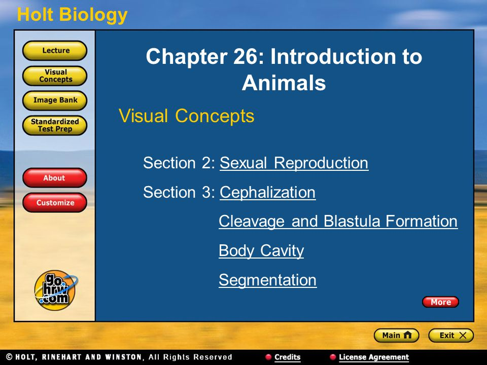 Holt Biology Chapter 26: Introduction to Animals Visual Concepts Section 2: Sexual ReproductionSexual Reproduction Section 3: CephalizationCephalization Cleavage and Blastula Formation Body Cavity Segmentation