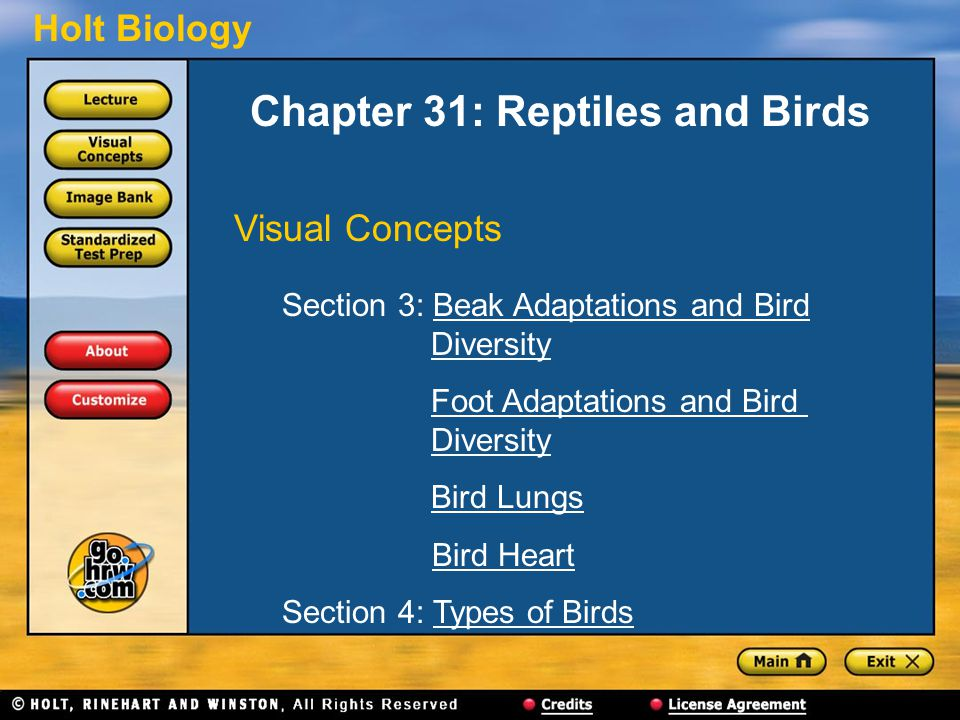 Holt Biology Chapter 31: Reptiles and Birds Visual Concepts Section 3: Beak Adaptations and Bird DiversityBeak Adaptations and BirdDiversity Foot Adap
