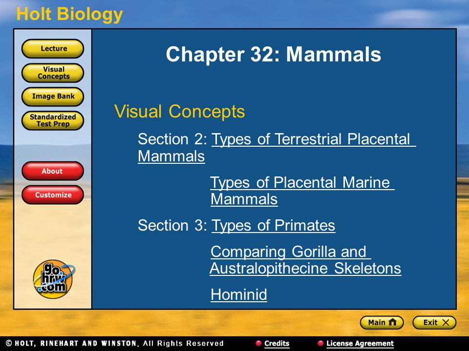 Holt Biology Chapter 32: Mammals Visual Concepts Section 2: Types of Terrestrial Placental MammalsTypes of Terrestrial Placental Mammals Types of Plac