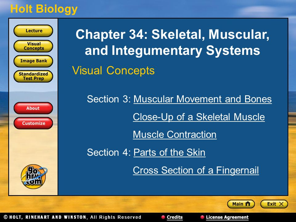 Holt Biology Chapter 34: Skeletal, Muscular, and Integumentary Systems Visual Concepts Section 3: Muscular Movement and BonesMuscular Movement and Bones Close-Up of a Skeletal Muscle Muscle Contraction Section 4: Parts of the SkinParts of the Skin Cross Section of a Fingernail