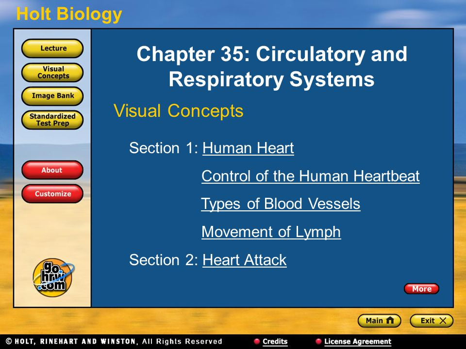 Holt Biology Chapter 35: Circulatory and Respiratory Systems Visual Concepts Section 1: Human HeartHuman Heart Control of the Human Heartbeat Types of