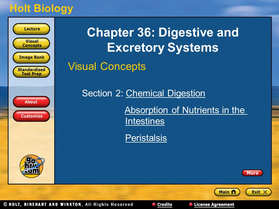 Holt Biology Chapter 36: Digestive and Excretory Systems Visual Concepts Section 2: Chemical DigestionChemical Digestion Absorption of Nutrients in the IntestinesAbsorption of Nutrients in theIntestines Peristalsis
