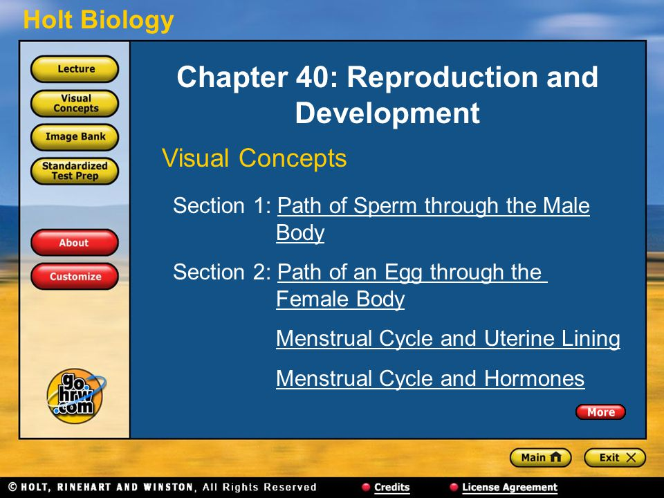 Holt Biology Chapter 40: Reproduction and Development Visual Concepts Section 1: Path of Sperm through the Male BodyPath of Sperm through the MaleBody