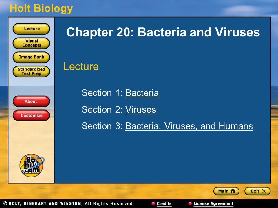 Holt Biology Chapter 20: Bacteria and Viruses Section 1: BacteriaBacteria Section 2: VirusesViruses Section 3: Bacteria, Viruses, and HumansBacteria, Viruses, and Humans Lecture