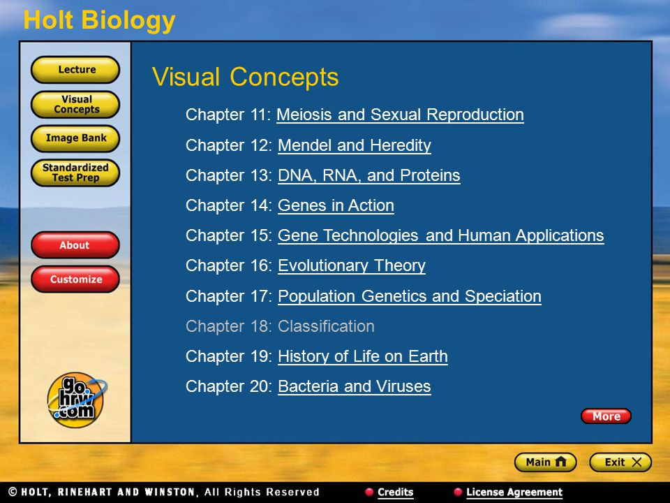Holt Biology Chapter 11: Meiosis and Sexual ReproductionMeiosis and Sexual Reproduction Chapter 12: Mendel and HeredityMendel and Heredity Chapter 13: DNA, RNA, and ProteinsDNA, RNA, and Proteins Chapter 14: Genes in ActionGenes in Action Chapter 15: Gene Technologies and Human ApplicationsGene Technologies and Human Applications Chapter 16: Evolutionary TheoryEvolutionary Theory Chapter 17: Population Genetics and SpeciationPopulation Genetics and Speciation Chapter 18: Classification Chapter 19: History of Life on EarthHistory of Life on Earth Chapter 20: Bacteria and VirusesBacteria and Viruses Visual Concepts