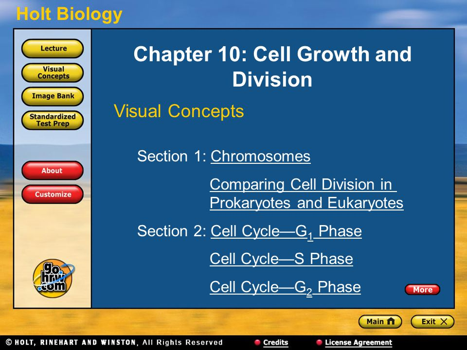 Holt Biology Chapter 10: Cell Growth and Division Visual Concepts Section 1: ChromosomesChromosomes Comparing Cell Division in Prokaryotes and EukaryotesComparing Cell Division inProkaryotes and Eukaryotes Section 2: Cell Cycle—G 1 PhaseCell Cycle—G 1 Phase Cell Cycle—S Phase Cell Cycle—G 2 PhaseCell Cycle—G 2 Phase