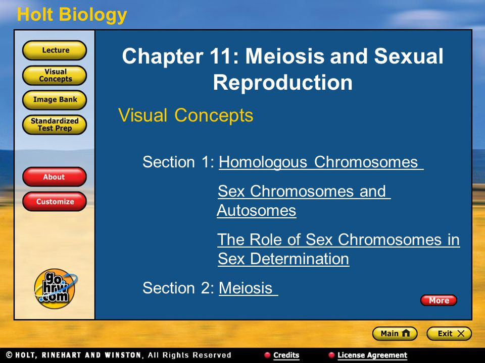 Holt Biology Chapter 11: Meiosis and Sexual Reproduction Visual Concepts Section 1: Homologous ChromosomesHomologous Chromosomes Sex Chromosomes and AutosomesSex Chromosomes andAutosomes The Role of Sex Chromosomes in Sex DeterminationThe Role of Sex Chromosomes inSex Determination Section 2: MeiosisMeiosis