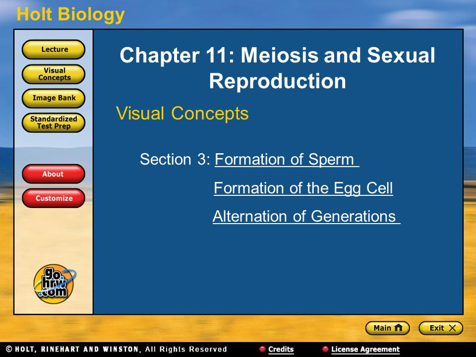 Holt Biology Chapter 11: Meiosis and Sexual Reproduction Visual Concepts Section 3: Formation of SpermFormation of Sperm Formation of the Egg Cell Alternation of Generations