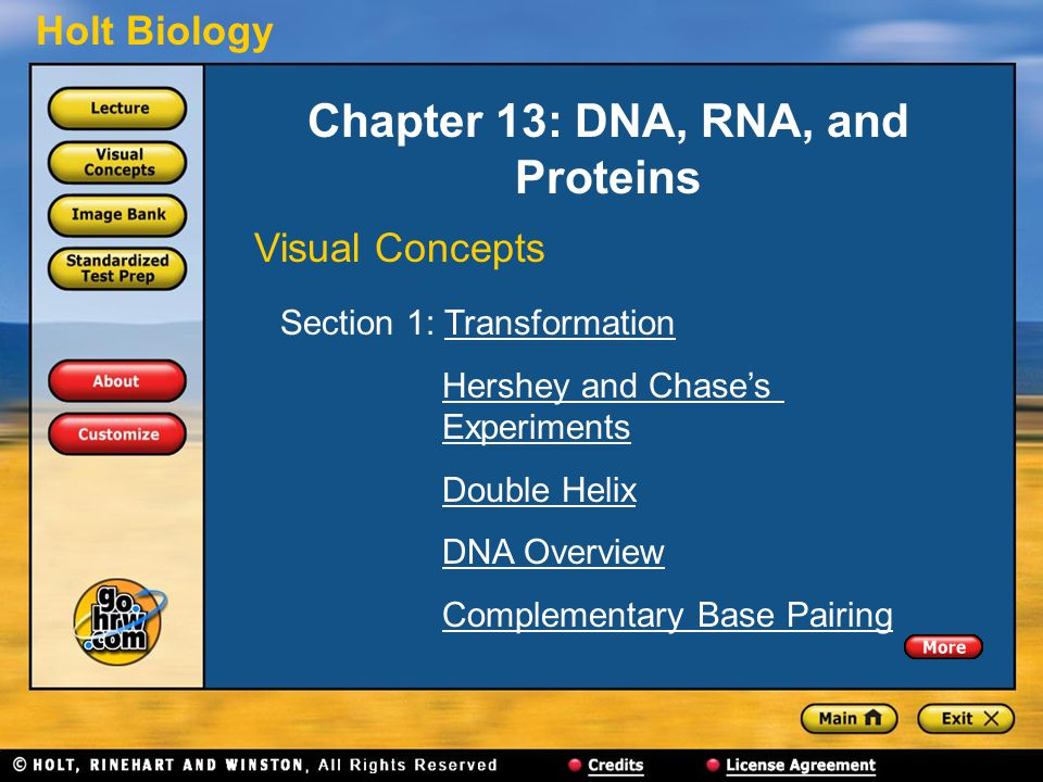Holt Biology Chapter 13: DNA, RNA, and Proteins Visual Concepts Section 1: TransformationTransformation Hershey and Chase's ExperimentsHershey and Cha
