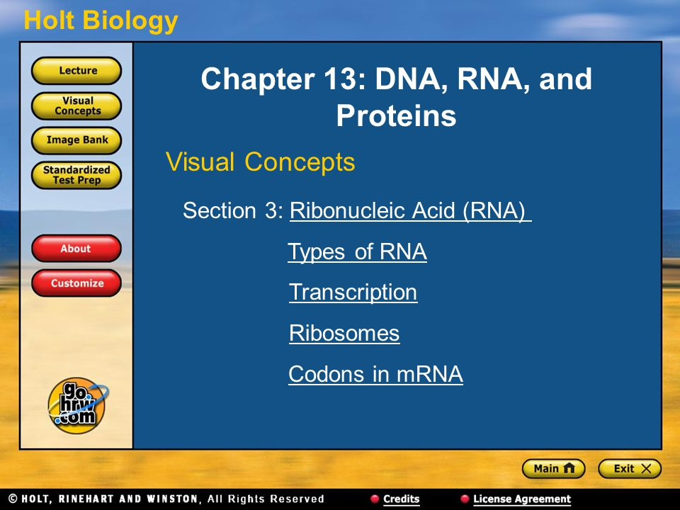 Holt Biology Chapter 13: DNA, RNA, and Proteins Visual Concepts Section 3: Ribonucleic Acid (RNA)Ribonucleic Acid (RNA) Types of RNA Transcription Ribosomes Codons in mRNA