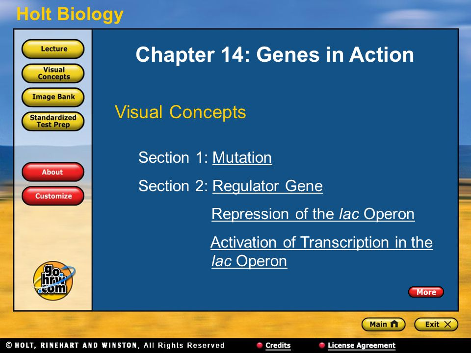 Holt Biology Chapter 14: Genes in Action Visual Concepts Section 1: MutationMutation Section 2: Regulator GeneRegulator Gene Repression of the lac Ope