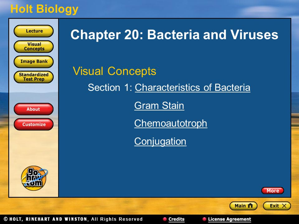 Holt Biology Chapter 20: Bacteria and Viruses Visual Concepts Section 1: Characteristics of BacteriaCharacteristics of Bacteria Gram Stain Chemoautotr