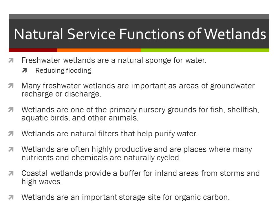 Natural Service Functions of Wetlands  Freshwater wetlands are a natural sponge for water.