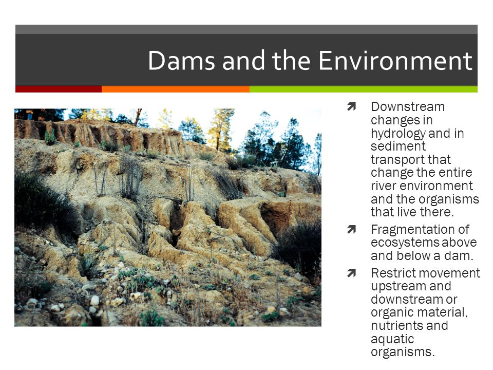 Dams and the Environment  Downstream changes in hydrology and in sediment transport that change the entire river environment and the organisms that live there.