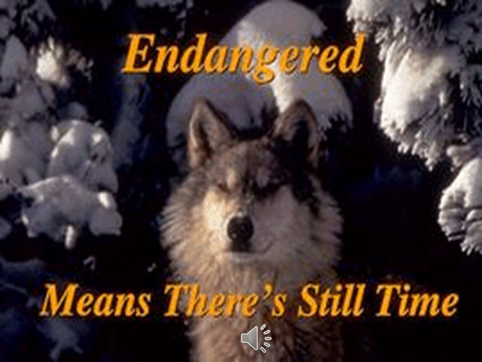 Endangered Means There's Still Time Endangered species are like fire alarms.