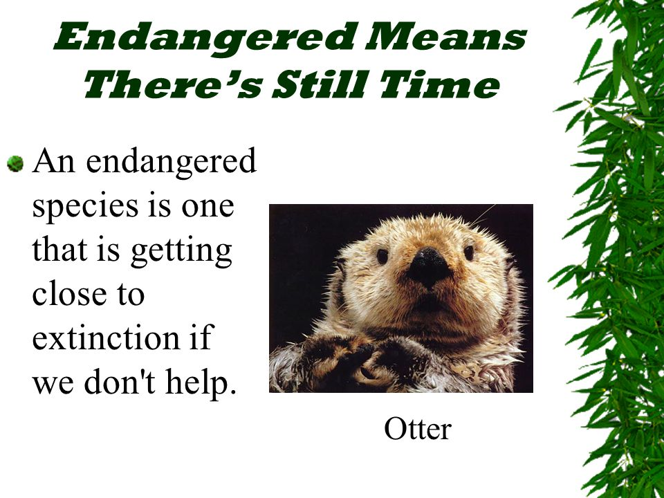 Endangered Means There's Still Time An endangered species is one that is getting close to extinction if we don t help.
