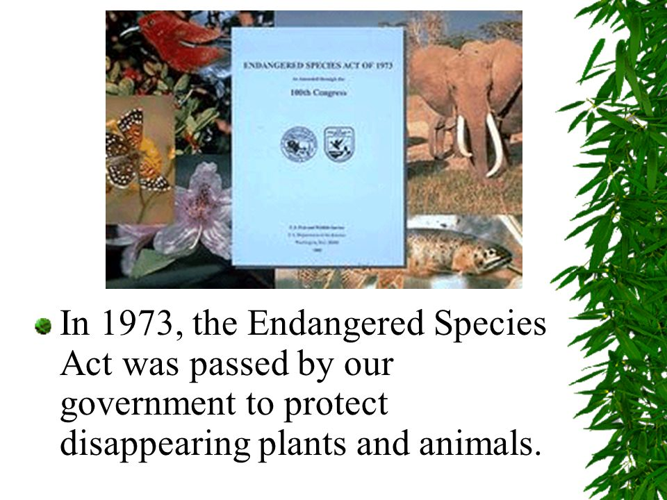 In 1973, the Endangered Species Act was passed by our government to protect disappearing plants and animals.
