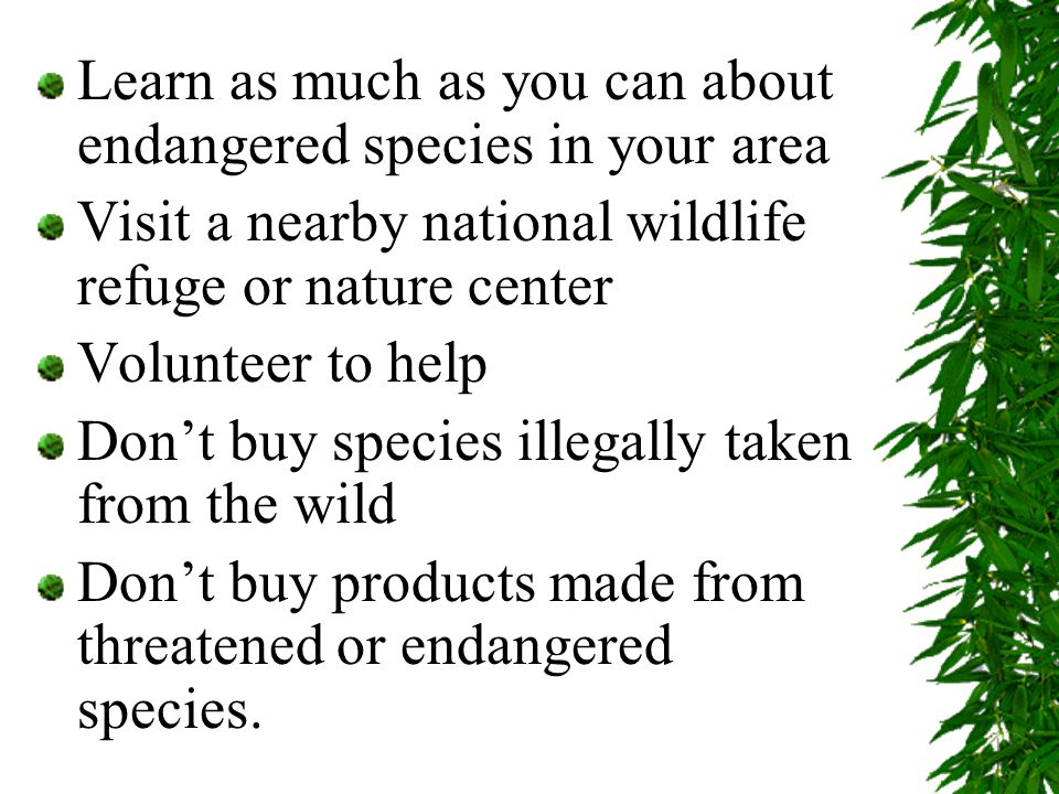 Learn as much as you can about endangered species in your area Visit a nearby national wildlife refuge or nature center Volunteer to help Don't buy species illegally taken from the wild Don't buy products made from threatened or endangered species.
