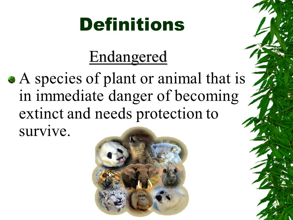 Definitions Endangered A species of plant or animal that is in immediate danger of becoming extinct and needs protection to survive.