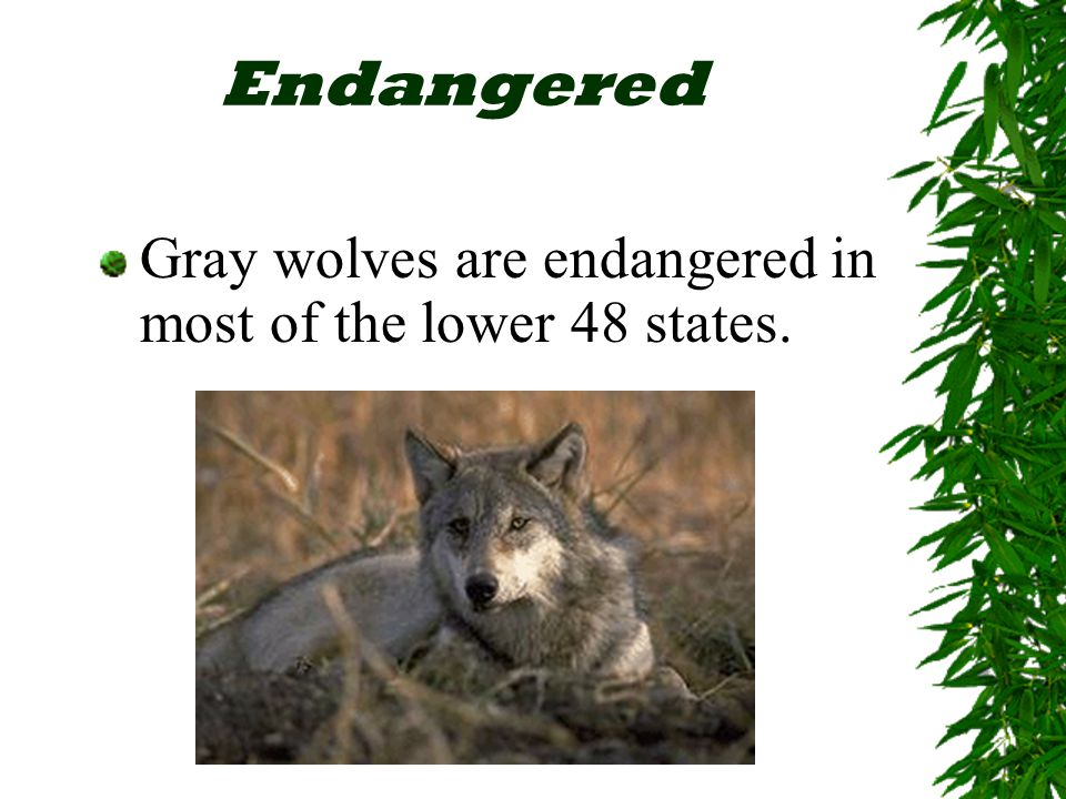 Endangered Means There's Still Time  Endangered species show us that our world may not be as healthy as we think.