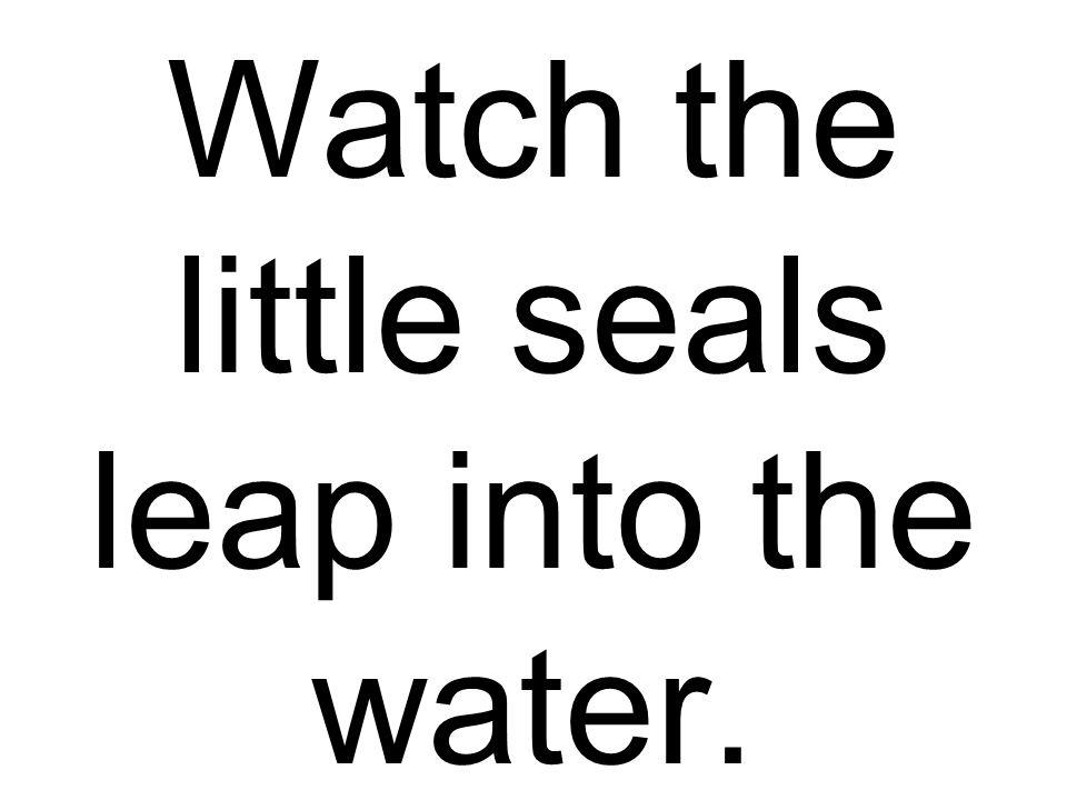 Watch the little seals leap into the water.