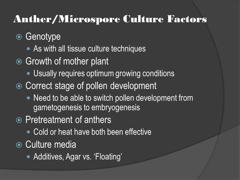 Anther/Microspore Culture Factors  Genotype As with all tissue culture techniques  Growth of mother plant Usually requires optimum growing condition
