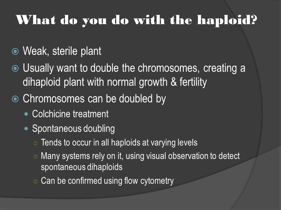 What do you do with the haploid?  Weak, sterile plant  Usually want to double the chromosomes, creating a dihaploid plant with normal growth & ferti
