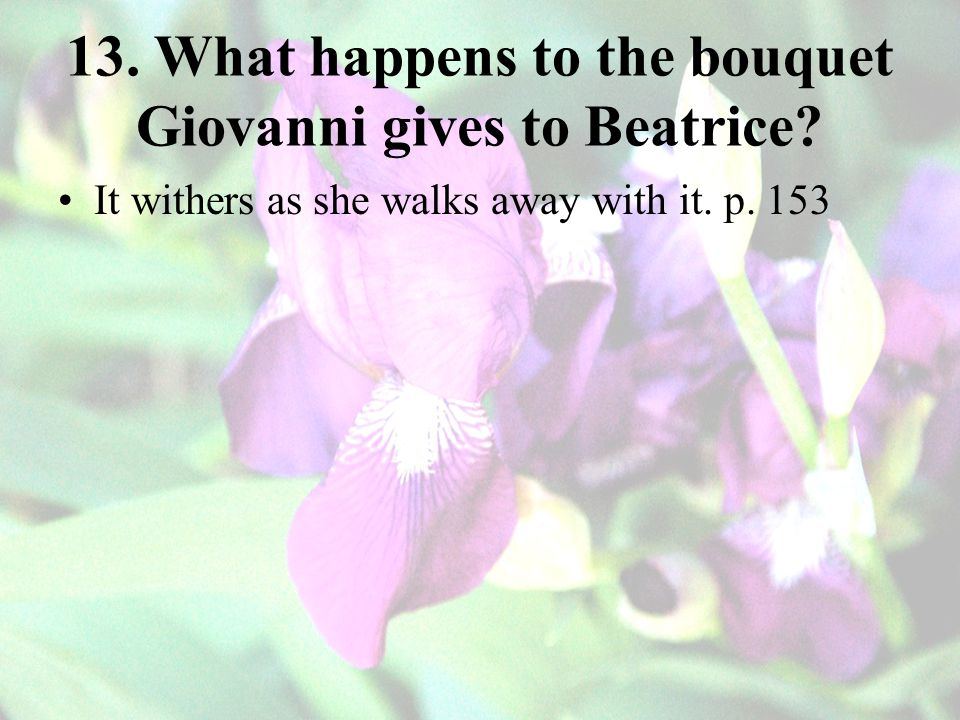 13.What happens to the bouquet Giovanni gives to Beatrice.