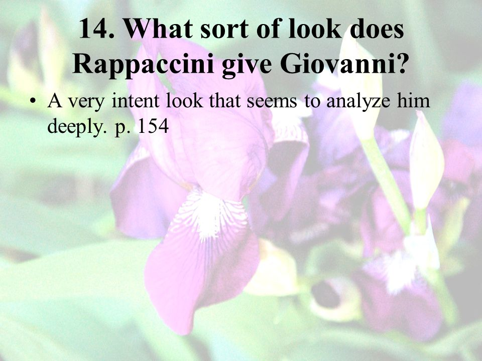 14.What sort of look does Rappaccini give Giovanni.
