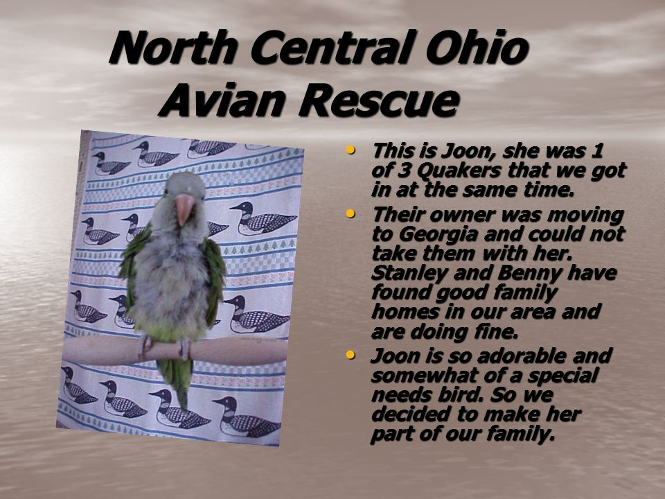 North Central Ohio Avian Rescue North Central Ohio Avian Rescue This is Joon, she was 1 of 3 Quakers that we got in at the same time.