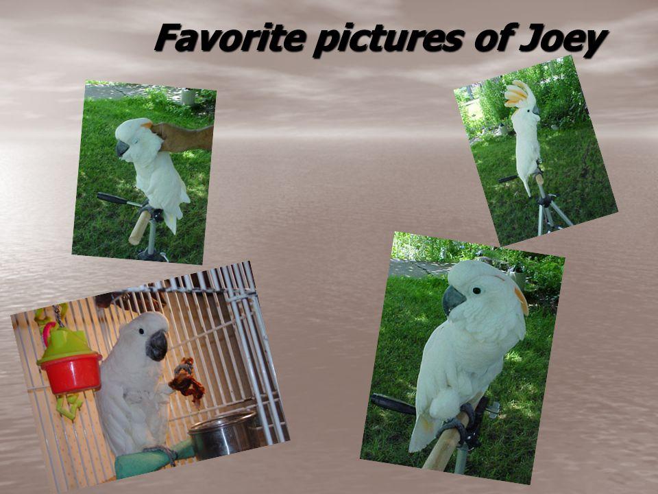 Favorite pictures of Joey Favorite pictures of Joey
