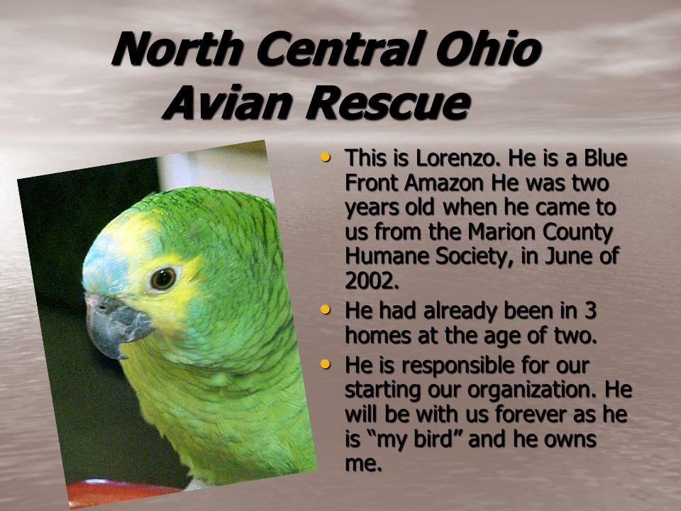 North Central Ohio Avian Rescue North Central Ohio Avian Rescue This is Lorenzo.