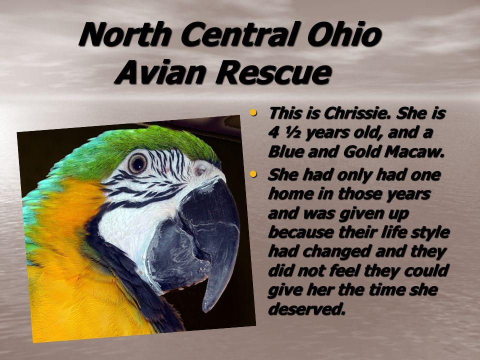North Central Ohio Avian Rescue North Central Ohio Avian Rescue This is Chrissie.