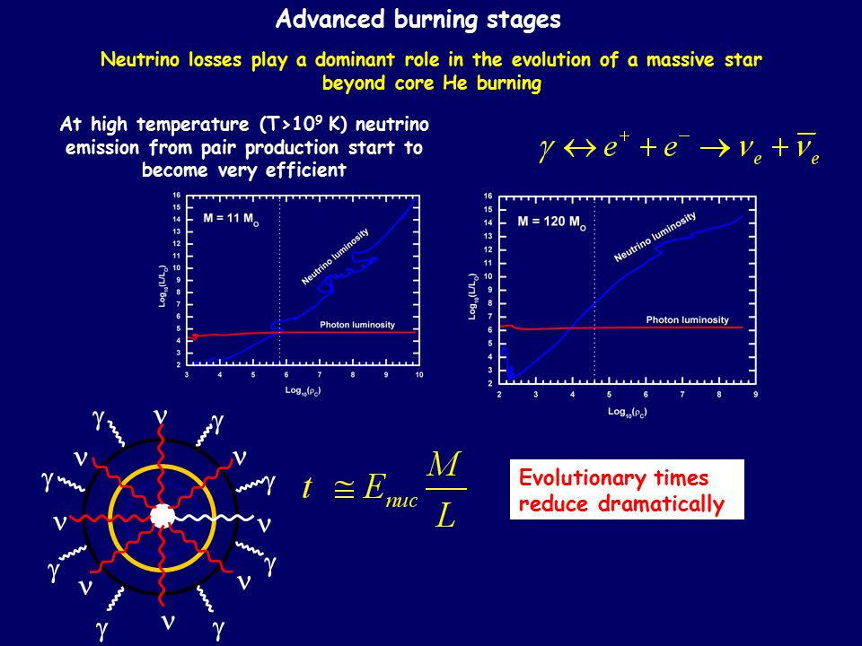 Advanced burning stages Neutrino losses play a dominant role in the evolution of a massive star beyond core He burning At high temperature (T>10 9 K)