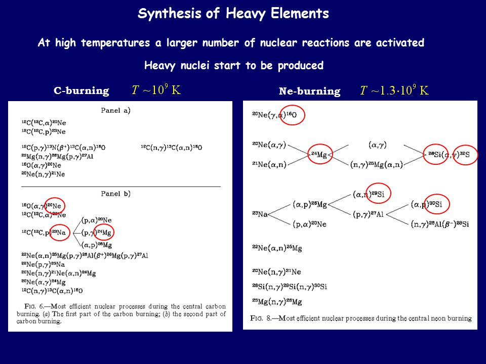 Synthesis of Heavy Elements At high temperatures a larger number of nuclear reactions are activated Heavy nuclei start to be produced C-burning Ne-bur