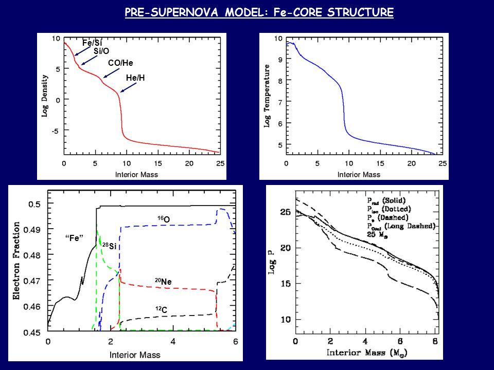 PRE-SUPERNOVA MODEL: Fe-CORE STRUCTURE Fe/Si Si/O CO/He He/H 16 O 20 Ne 12 C 28 Si Fe