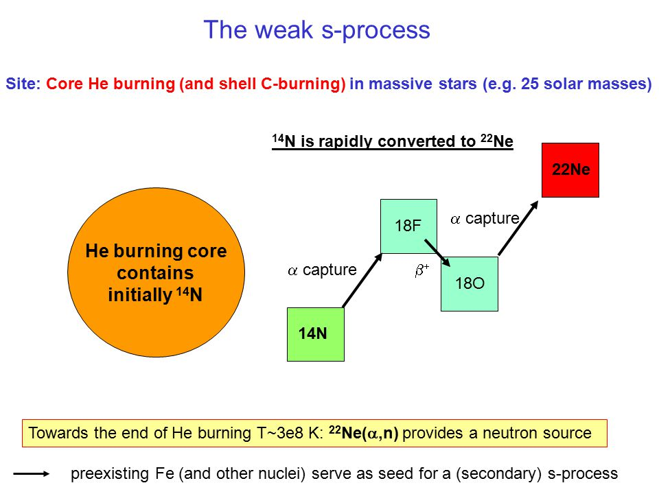 The weak s-process Site: Core He burning (and shell C-burning) in massive stars (e.g. 25 solar masses) He burning core contains initially 14 N 14N 18F