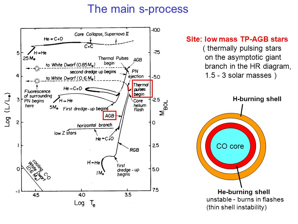 The main s-process Site: low mass TP-AGB stars ( thermally pulsing stars on the asymptotic giant branch in the HR diagram, 1.5 - 3 solar masses ) CO c