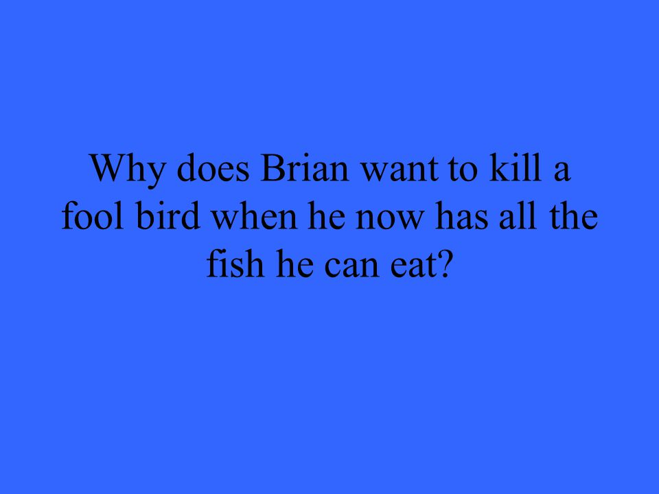 Why does Brian want to kill a fool bird when he now has all the fish he can eat?