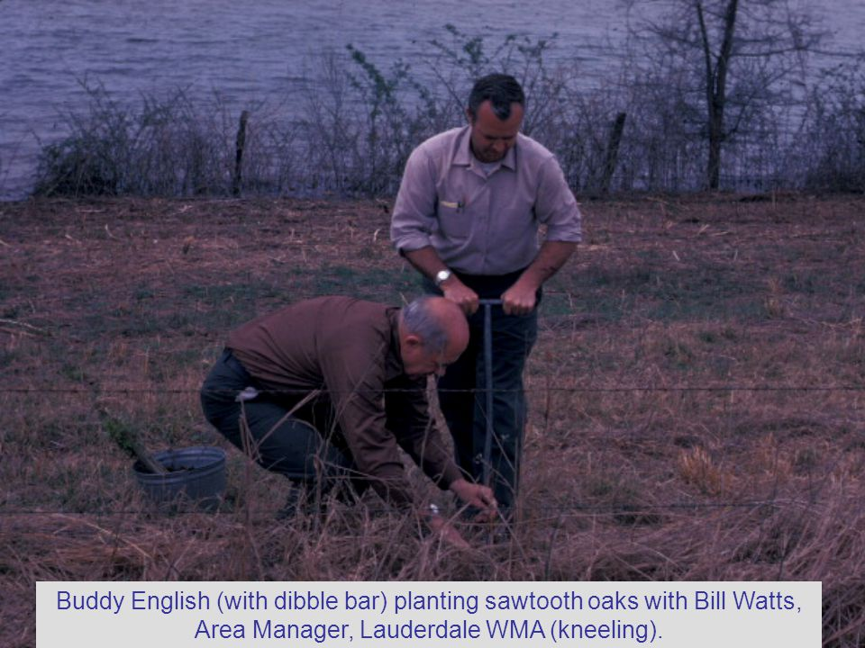 Buddy English (with dibble bar) planting sawtooth oaks with Bill Watts, Area Manager, Lauderdale WMA (kneeling).